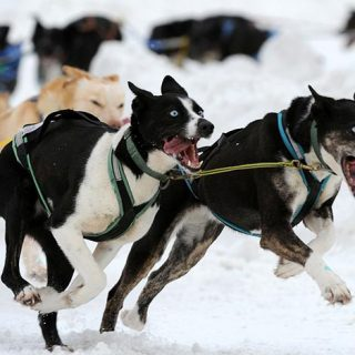 Dog Mushing Alaska