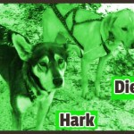 Hark and Diego