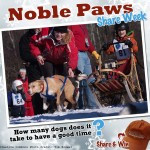 Sled dogs with purpose